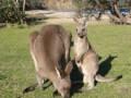 Kängurus und Sittiche ohne Gitter erleben