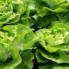 Frische Kräuter und Gemüse wieder uneingeschränkt im Handel