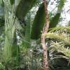 Eine der größten Pflanzensammlung der Welt
