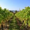 Weinreise ins Rhein-Main-Gebiet