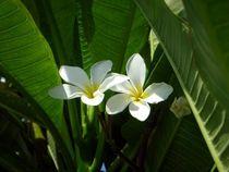 Pflanzen im Palmengarten