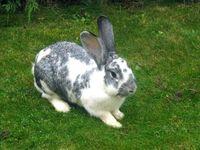 Kaninchen im Streichelzoo